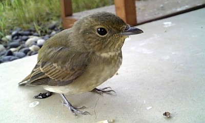 bird090825.jpg