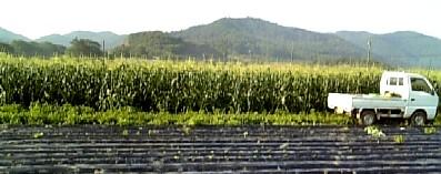 corn farm080824.jpg
