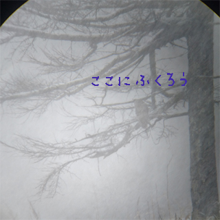 fukurou1.10.jpg