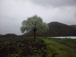 yamanashi100523.JPG