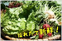 グレイス農園で収穫されたばかりの新鮮な野菜